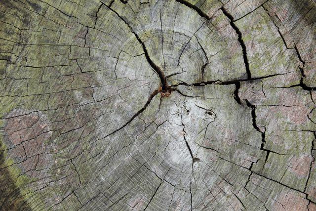 永く住みたいなら断然、20年保証付きの【長持ちする木材】