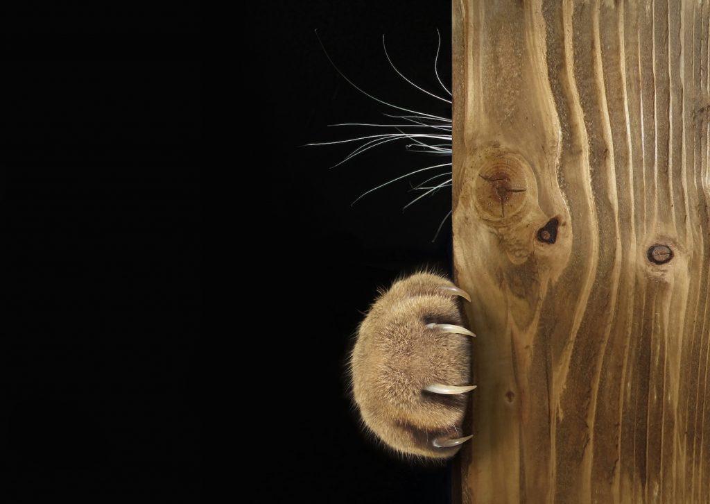 ネコが爪とぎしたがるのはどうして?遊んでいるだけではなかった!