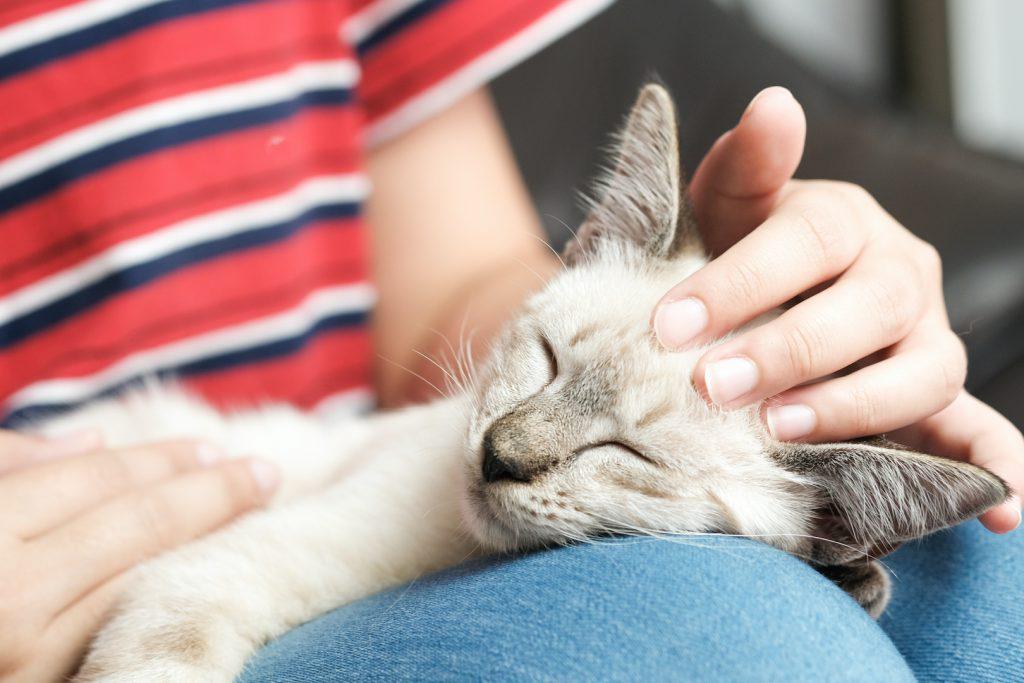 ネコへの愛で結ばれた絆☆「猫カフェ&Cat Shelterかごにゃん」